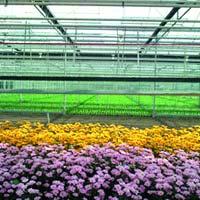 Florile din Uniunea Europeana, scutite de taxe