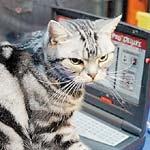 Campionatul celor mai destepte pisici
