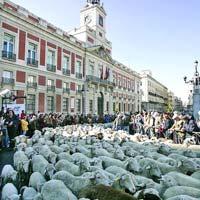Protest cu oi la Madrid