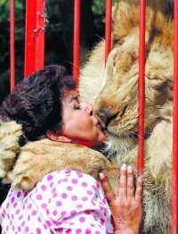 Dragoste de leu