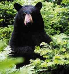 Urs amendat pentru ca a furat miere
