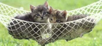 Concediu de maternitate pentru cand iti naste pisica