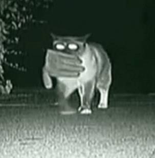 O pisica cleptomana a furat peste 600 de lucruri de la vecini